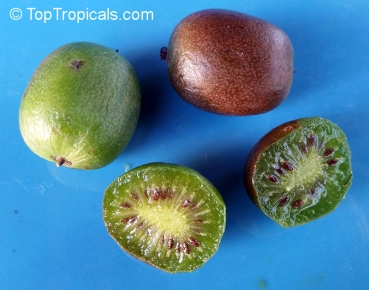 Kiwi Sorte Gelb 200 Saatgut Seeds